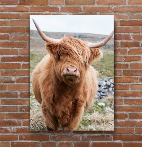 Out on the Hills Highland Cow Premium Canvas Print